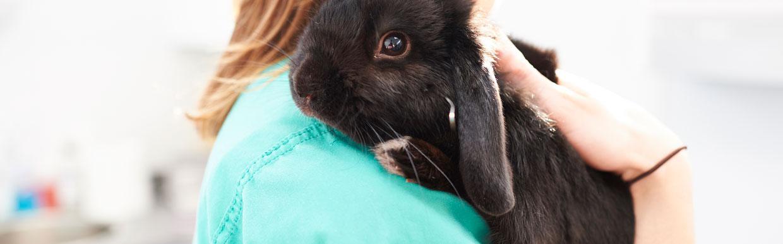 Rabbit Awareness Week 28th June – 4th July 2021